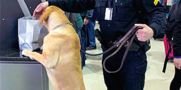 الكلاب عندها القدرة تعرف المصابين بالسرطان بنسبة 97%