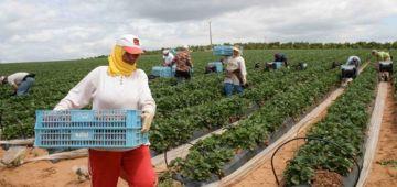 وزير الفلاحة: فالخريف تزرعات 109 آلاف هكتار خاصة بالخضر والفواكه وخدامين على الزراعات الربيعية ف مساحة ديال 91.600 هكتار
