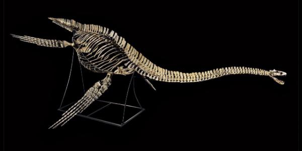 دابا شكون اللي خرّج أجزاء الديناصورات من خريبكة؟ وشكون اللي غادي يخلّص باش يرجّعها؟
