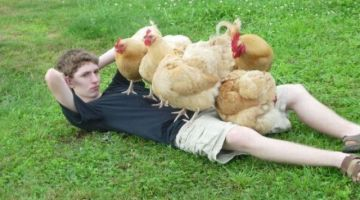 صحاب الدجاج: نسبة وفيات الدواجن بسباب الشرگي اللي تنشرات كذوب