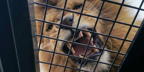السبوعة يتفرجو فينا. اول حديقة حيوانات فالعالم البشر فالقفص والحيوان حر طليق( فيديو)