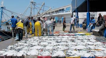 بعد تأخر مصادقة البرلمان على اتفاقية الصيد مع أوربا.. بالأرقام: قطاع الصيد البحري حقق قفزة كبيرة ف الإنتاج