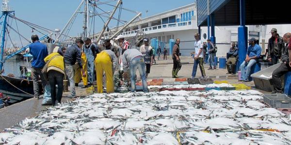 بعد تجديد اتفاقية الصيد مع المغرب..الاتحاد الأوروبي: أكدنا على استفادة الساكنة من العائدات المالية