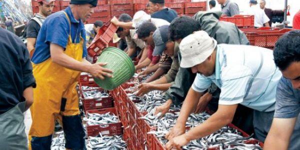 جورنالات بلادي: تشفرات 11 مليار من دعم الفلاحين.. وخلافات موقفة اتفاق الصيد البحري