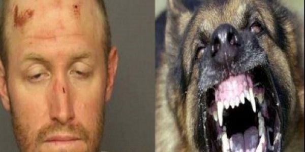 محاكمة ميريكاني تعدى على كلب بوليسي أثناء تأدية واجبه