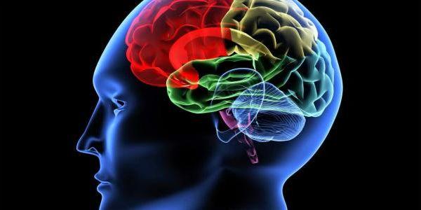 """العلماء: لقينا خلية """"فريدة"""" فالمخ كتميز الإنسان على باقي الكائنات"""