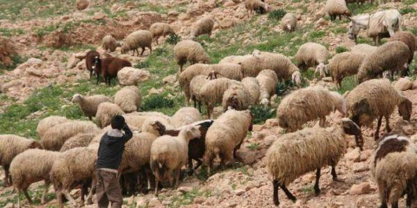 سرحة سالات باغتصاب وحشي. الجدارمية شدو قاصر اغتصب صاحبو اللي عندو 12 عام في الخلا