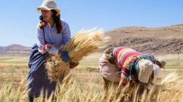 لقاء عمل مع مهنيين الحبوب دارو القرض الفلاحي للتأكيد على مكانة هذ السلالة الإنتاجية ودعمها