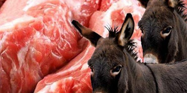 فضيحة.. سناك كيبيع لحم الحمير والكلاب لسنوات