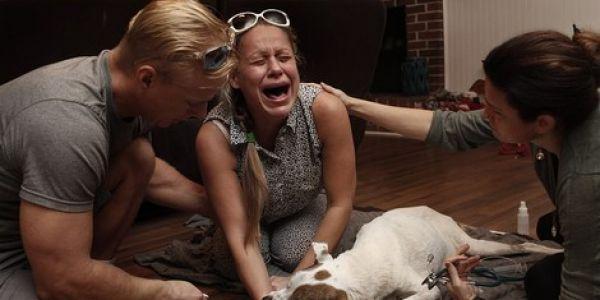 تصاور مؤثرة لمواقف وداع الناس وحيواناتهم الأليفة