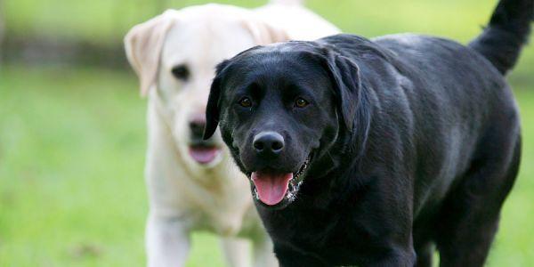 مأساة.. 15 كلب هجمو على دري صغير وقتلوه