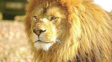 600 نوع من الحيوانات و1700 نوع ديال النباتات فالمغرب مهددة بالانقراض
