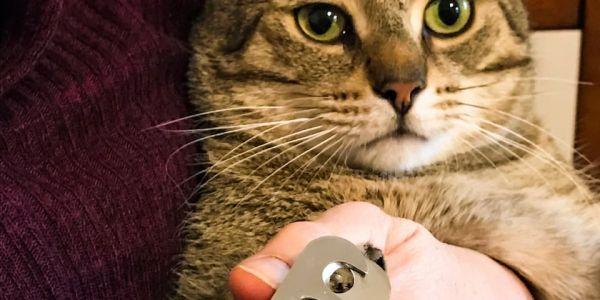قرار زوين من أجل الحيوانات. نيويورك منعات يحيدو للمشاش الضفران