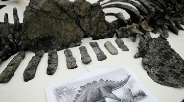 """بعد العثور علىبقايا أقدم ديناصور فالعالم.. الوزير الرباح لـ""""كود"""": الأبحاث متواصلة"""