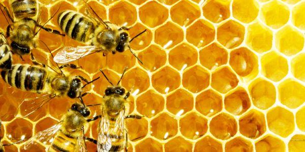 النعاس مع النحل… طريقة جديدة باش تعالجى حريق الظهر
