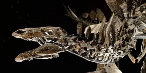 هادشي فالمغرب.. لقاو أقدم ديناصور فالعالم وعطاوه سمية امازيغية – تصاور