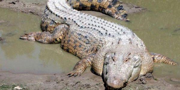 قلة مايدار صعيبة.. جوج شدو تمساح وبغاو يسكروه صحة!