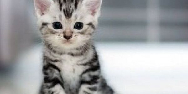 مزيانة فيه.. الحبس والغرامة لراجل قتل قطة بطريقة بشعة وبلا رحمة بلا شفقة