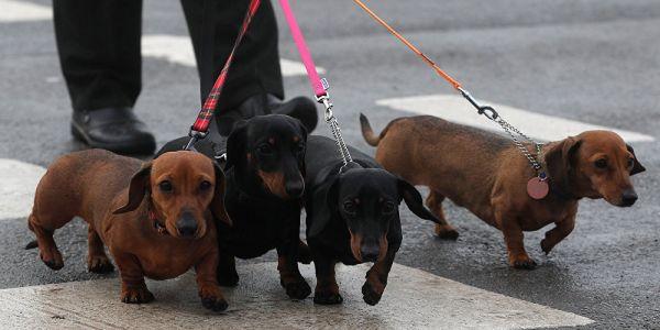 علماء كتاشفو أن الكلاب يقدرو يعرفو بنادم الكذاب من الصادق