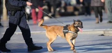 البوليس في بلجيكا بداو كيدربو الكلاب على اكتشاف فيروس كورونا – فيديو