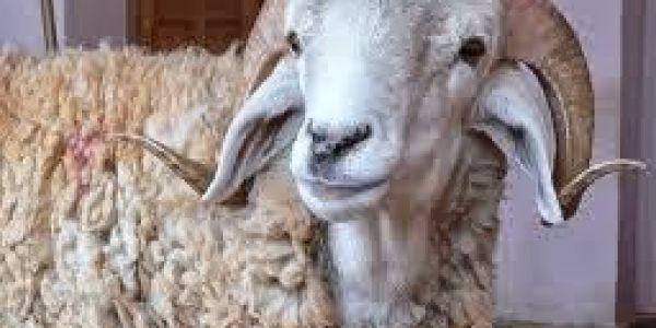 عاماين وربع شهور دلحبس لمغربي ذبح الحولي دالعيد الكبير قدام ولدو وصدمو