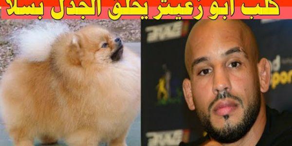 """تفضيل كلب """"أبو زعيتر"""" على كثير ممن لبس الثياب! حاشا أن يكون  كلبا مجحوما يا موقع كود"""