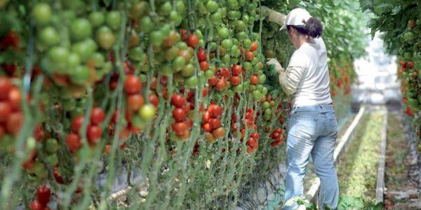 مصائب قوم عند قوم فوائد. المغرب بقى لاعب بوحدو فصادرات الخضراوات والفواكه لأوروبا وشمال أمريكا