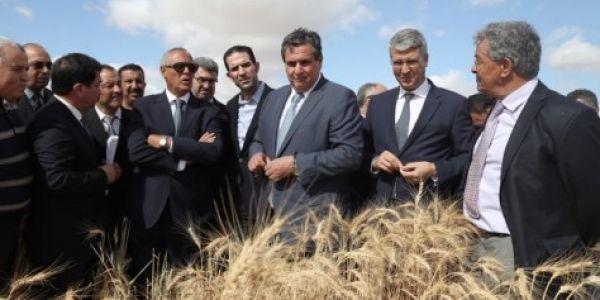 وزارة الفلاحة عطات الشعير لمالين لبهايم زمن الجفاف. ها شحال