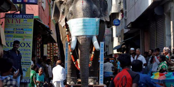كورونا.. منظمة الصحة العالمية: السلالة الهندية خطيرة والفاكسان يقدر مايفيدش فيها
