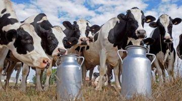 """بعد مساهمة """"كوباك"""" و""""سنترال""""..أمين مال فيدرالية الحليب عرقل عملية """"التبرع"""" في صندوق """"كورونا"""""""