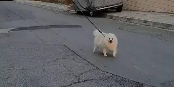 راجل لقا حل زوين باش يخرج الكلب ديالو للزنقة بلاما يكسر الحجر الصحي فزمن كورونا -فيديو