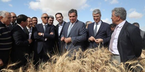 الخدمة فالسكوت. المعهد الوطني للبحث الزراعي طور اصناف جديدة من الحبوب