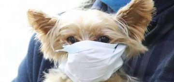اصابة أول كلب بفيروس كورونا.. ودابة داروه فالحجر الصحي هو ومولاه فالدار