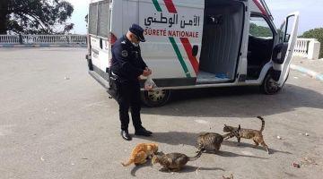 عناصر البوليس تطوعو باش يوكلو القطط فالزناقي ويعتقوهم من الجوع والعطش ففترة الحجر الصحي – تصاور