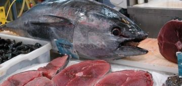 """شركات تصدير """"التونة"""" نهبات ملايير الدولة"""