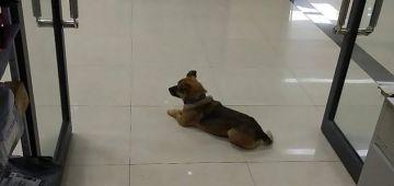 كلب وفي رفض يمشي من قدام سبيطار واخا مولاه مات هادي 3 شهور بكورونا -تصاور