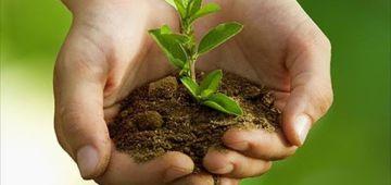 المغرب كيحتل المرتبة 12 عالميا كمصدر للنباتات العطرية والطبية