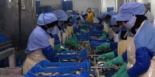 """بؤرة """"الحوت"""" فآسفي..  النيابة العامة تابعات مسؤوليين عن تسيير الوحدة الصناعة لتصبير الأسماك وحتى المكلفين بتنفيذ البروتوكول الصحي"""