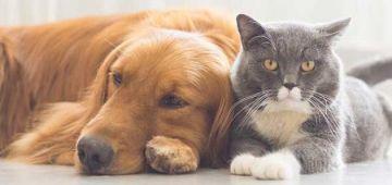 دراسة: الناس لي عندهم الحيوانات مكيحسوش بالوحدة بزاف وصحتهم النفسية كتكون مزيانة
