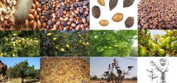 الأمم المتحدة اعتمدات 10 ماي كيوم دولي لشجرة الأركَان