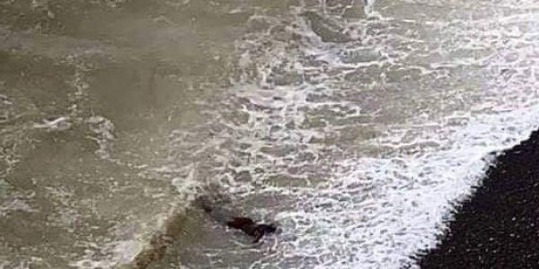 جثة جديدة لاحها البحر فالناظور – تصويرة