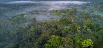 أونكيط: غابات الأمازون كتباع طرف بطرف و بطريقة غير قانونية ف فايسبوك