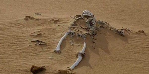 السمارة: جثة متحللة فنواحي السمارة دارت استنفار فالسلطات