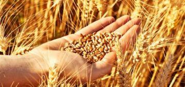 المغرب فالمركز 57 عالميا والسابع عربيا فمؤشر الأمن الغذائي