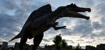 اكتشاف بقايا أقدم حيوان ف العالم كيرجع تاريخها لاكثر من 66 مليون عام