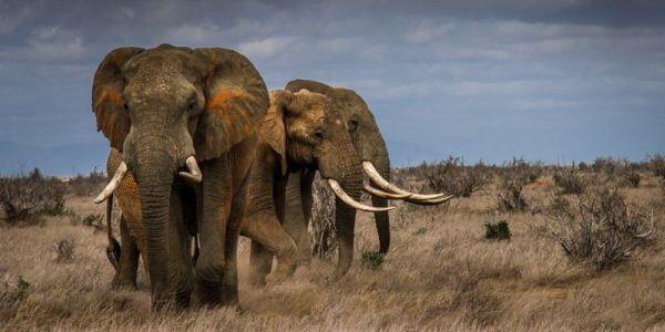 فـ ثواني قليلة.. صاعقة ديال البرق قتلات 18 فيل منهم 5 صغار
