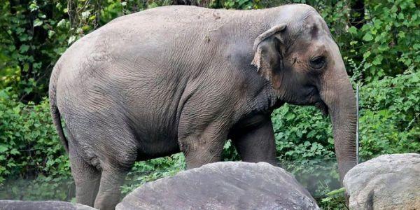 محكمة فـ نيويورك غاتناقش دعوى قضائية من فيل ضد حديقة ديال الحيوان
