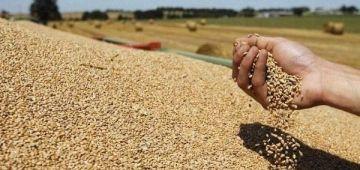 هاد العام.. الإنتاج ديال الحبوب فات 100 مليون قنطار والقيمة المضافة فـ القطاع غاتوصل لـ130 مليار درهم