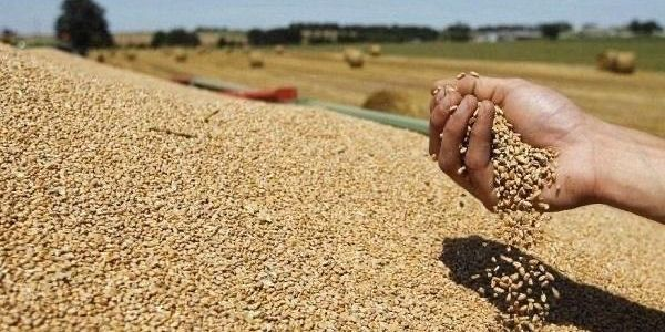 المحصول الزراعي زين هاد العام.. المغرب غادي يرجع الرسوم الجمركية على القمح باش يدعم المنتوج الوطني ويساعد الفلاحين