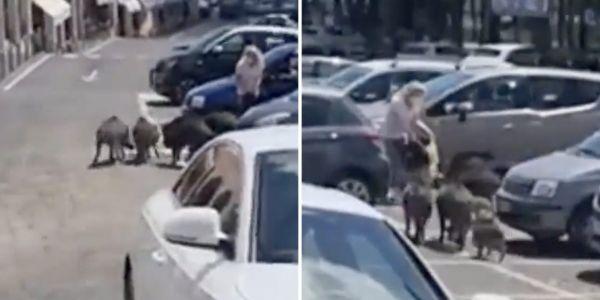 بالفيديو.. عدد من الخنازير هجمو على مرا وسرقو ليها التقدية